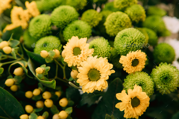 Bouquet Of Flowers Of Yellow And Green Chrysanthemums - Stock Photo - Images