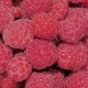 Fresh Raspberry Fruits - VideoHive Item for Sale