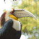 Wreathed Hornbill - VideoHive Item for Sale