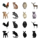 Animal Species - GraphicRiver Item for Sale