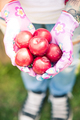 Female hands holding rope red plums in garden - PhotoDune Item for Sale