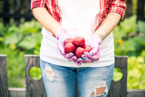 Female hands holding rope red plums in garden - Stock Photo - Images