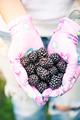 Young gardener woman holding blackberries in hands in garden - PhotoDune Item for Sale