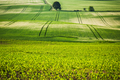 Rolling green fields, coutryside. - PhotoDune Item for Sale