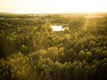 Sunrise over forest in autumn, aerial drone view - PhotoDune Item for Sale