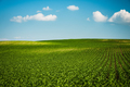 Green farm rolling hills in fields and blue sky - PhotoDune Item for Sale