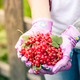 Female hands holding fresh redcurrant fruits in garden - PhotoDune Item for Sale
