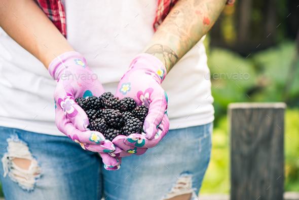 Young gardener woman holding blackberries in hands in garden - Stock Photo - Images