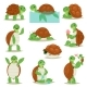 Turtle Vector Cartoon Seaturtle Character Swimming