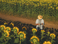 Farmer agronomist using drone to examine sunflower crop field - PhotoDune Item for Sale