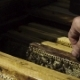 Beekeeper Checking Honeycombs in Beehive - VideoHive Item for Sale