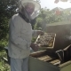 Beekeeper Holding Honeycombs and Standing Near Open Bee Hive in the Garden - VideoHive Item for Sale