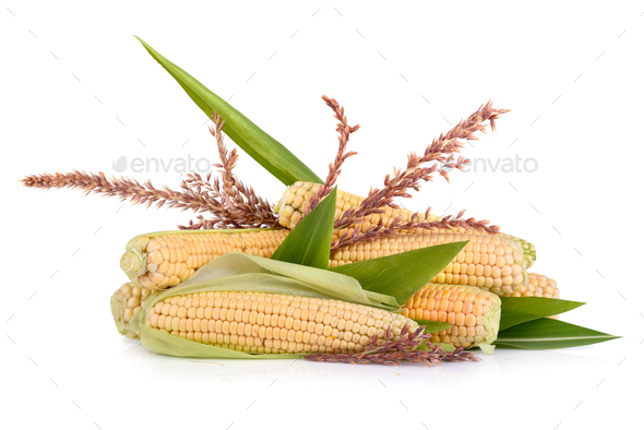 Corn in cobs - Stock Photo - Images