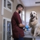 Vet Doctor Bandaging Dog After Blood Sample - VideoHive Item for Sale