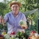 An Elderly Farmer Is Selling Vegetables on the Farm Market - VideoHive Item for Sale