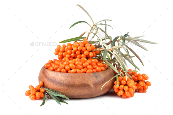 Sea buckthorn - Stock Photo - Images
