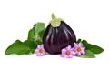 Ripe big eggplant - PhotoDune Item for Sale