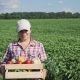 Farmer Holding Fresh Vegetables in a Wooden Box - VideoHive Item for Sale