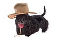 Dog in hat - PhotoDune Item for Sale