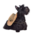 Scotch terrier in hat - PhotoDune Item for Sale