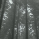 Misty Woods - VideoHive Item for Sale