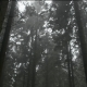 Move Through Eerie Woods - VideoHive Item for Sale