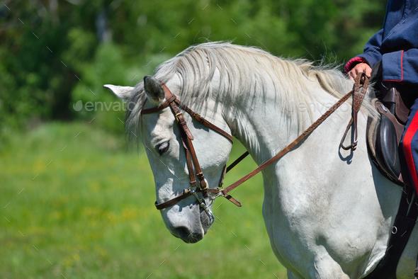 White horse - Stock Photo - Images