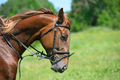 Portrait of horse - PhotoDune Item for Sale