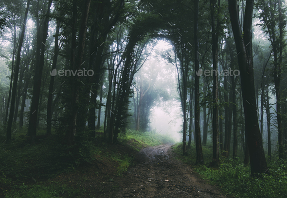 Path through mysterious dark forest after rain - Stock Photo - Images