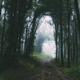 Path through mysterious dark forest after rain