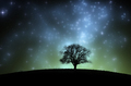 Tree silhouette under starry sky at night - PhotoDune Item for Sale