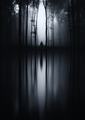 Haunted forest dark lake reflection - PhotoDune Item for Sale