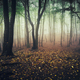 Mysterious autumn forest with fog - PhotoDune Item for Sale