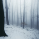 Enchanted foggy winter forest at dusk - PhotoDune Item for Sale