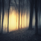 Sunset in spooky dark forest with fog on Halloween - PhotoDune Item for Sale