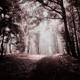 Surreal forest in autumn with fog and dreamy colors - PhotoDune Item for Sale