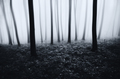 Dark mysterious Halloween forest with fog in the evening - PhotoDune Item for Sale