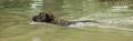 Rescue dog training - PhotoDune Item for Sale