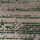 Corn field Dies in the Extreme Drought in Sweden - VideoHive Item for Sale