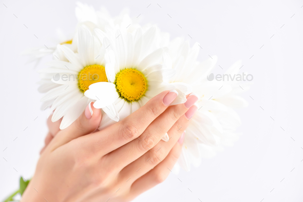 Beautiful woman french manicured hands with fresh daisy flowers - Stock Photo - Images
