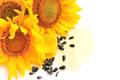Sunflower oil with flowers and by seed on white background - PhotoDune Item for Sale