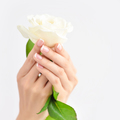 Hands of a woman with beautiful french manicure and white rose - PhotoDune Item for Sale