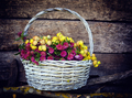 Clover flowers in a basket (Anthyllis vulneraria, Trifolium alpe - PhotoDune Item for Sale