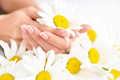 Beautiful woman french manicured hands with fresh daisy flowers - PhotoDune Item for Sale
