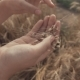 Woman's Hand Touching Golden Wheat Field - VideoHive Item for Sale