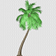 Coconut Palm Tree - VideoHive Item for Sale
