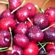 Group of Ripe Juicy Dark Red Cherry - VideoHive Item for Sale