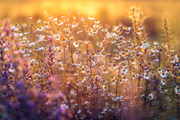 Summer meadow - Stock Photo - Images