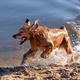 Dog having fun by the water - PhotoDune Item for Sale