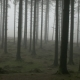 Spooky Forest in Mist - VideoHive Item for Sale